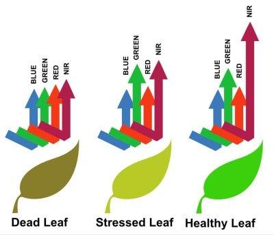 leaf reflectivity via photosynthesis