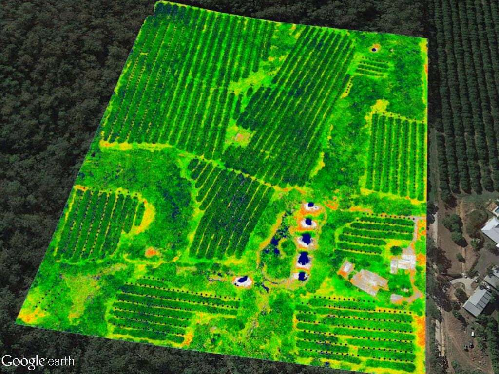 NDVI mapping of macadamia orchard
