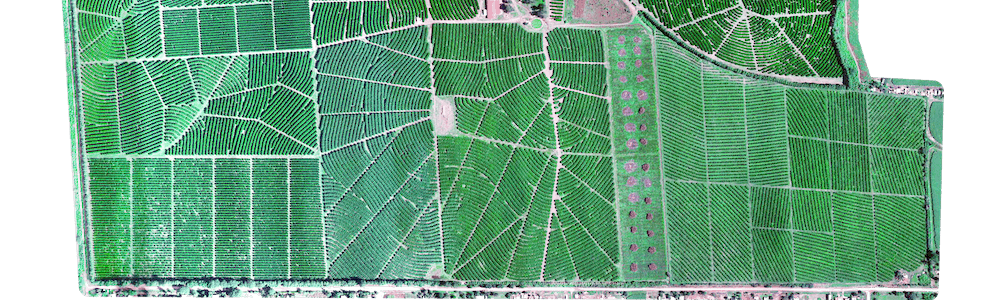RGB image of tree plantation captured by Micasense Rededge